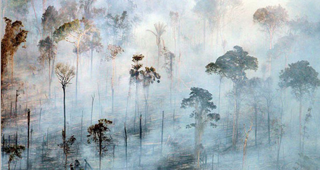 Amazon-burning-of-the-rain forest. Environmental damage, greed, exploitation of global ressources